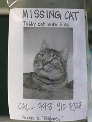 Baloney (jjlthree) Tags: 3 chicago cat missing legs tabby picture ravenswood baloney