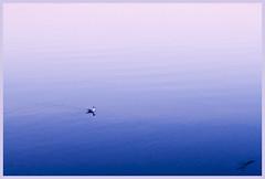 Gaviota en Sada (jeremyah75) Tags: azul mar gaviota sada anawesomeshot