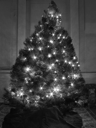 Baby's First Tree