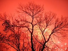 Black tree on a red sky (mdanys) Tags: interesting fireworks osama unusual lithuania vilnius lietuva danys abigfave mdanys