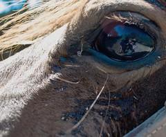 El Ojo de dios (SnowP) Tags: horses selfportrait galope