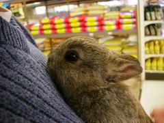 Happy New year!    Feliz Ao Nuevo! (Rubyran) Tags: rabbit bunny lovely1 conejo coelho lapin kaninchen coniglio rubyran ponyo kuneho