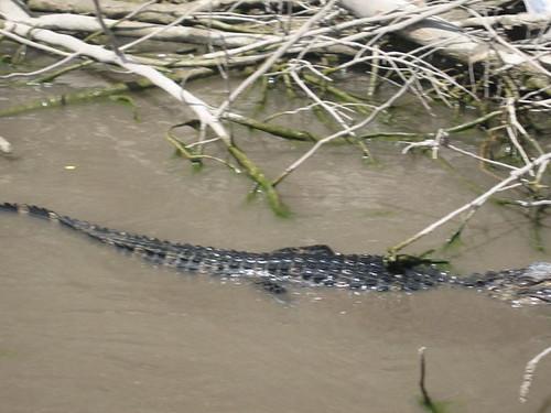 zoo air aligator everglades viator daytripsfromorlandoflorida orlandothingstodo orlandoswimwithdolphins boateverglades orlandodaytrips popularactivitiesandthingstodoinorlando sightseeingorlando