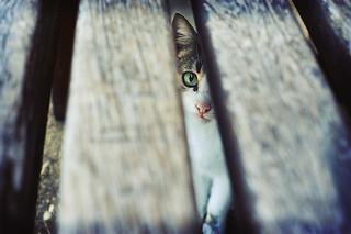 El ojo que me descubre ...