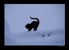 Schneekatze - snowcat