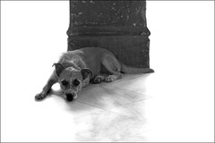 The dog at La Guarida (Dave_Davies) Tags: dog animal mono havana cuba highkey habana laguarida