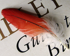 Red-feather-2