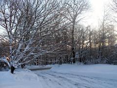 Snow_11909