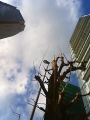 2009/1/23 渋谷 午前九時半