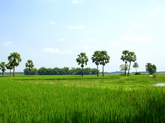 green valey (drsuparna) Tags: blue sky india tree green field pond village rice coconut suparna