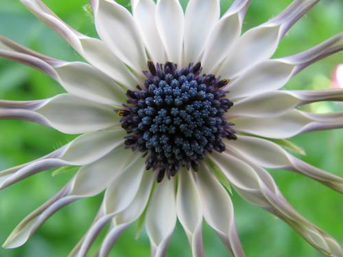 Flower 0563