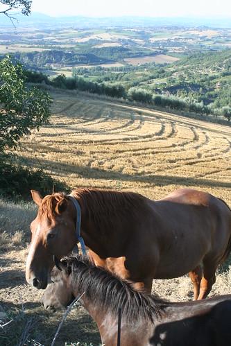 Horses_7508