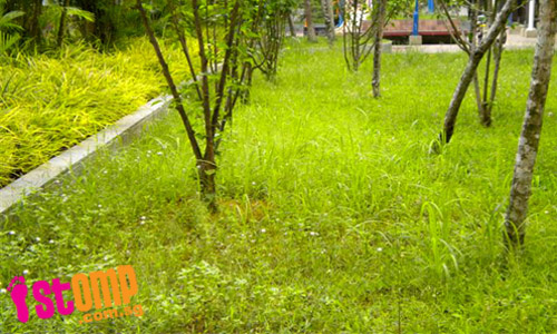 Neglected garden in Sengkang overgrowing with weeds