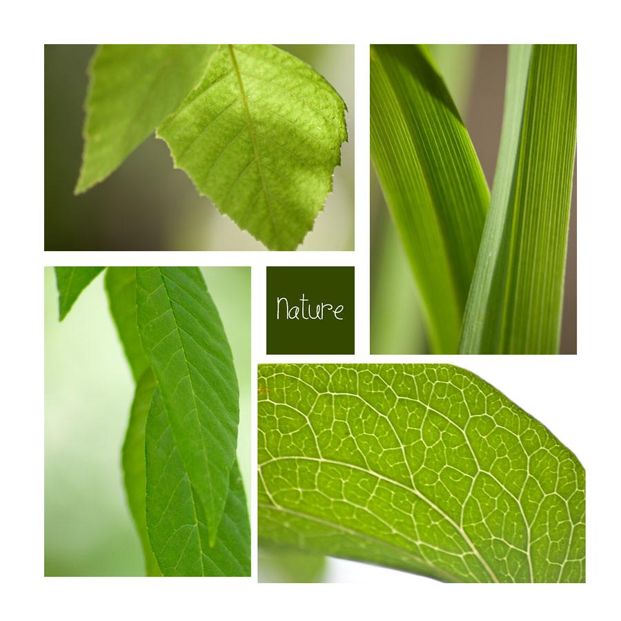 leaf-veins