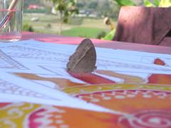 Butterfly!