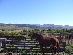 Bariloche - Cabalgata - cheval
