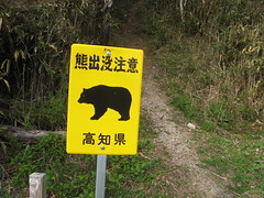 There are bears