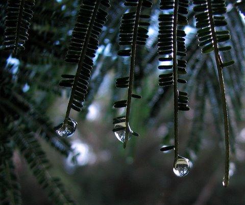 raindrops on leaves kodai 240508 S3