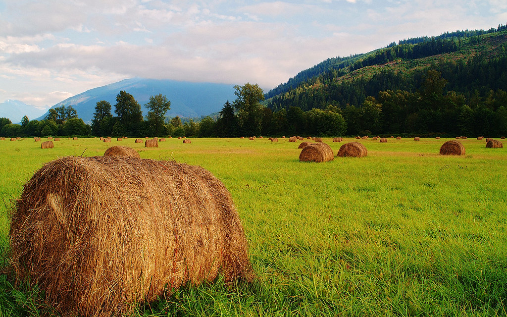 Fields of Hay