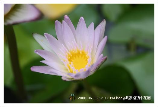 20080605@我家樓頂的小花園 (3)