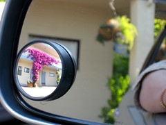 Bougainvillea view from a spot mirror (Bionic Rhonda, back slowly) Tags: parkinglot bougainvillea views havingfun foolingaround wastingtime masterphotographer awesomeshot playingwithacamera anawesomeshot cindersmom spotmirror