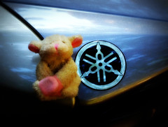 trying to hitch a lift home (Singing With Light) Tags: sheep yamaha magnetictoy bahbahra