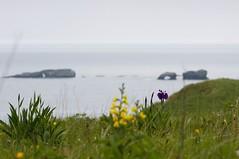 海岸の花と窓岩