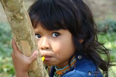 guarani 2 (mario kojima) Tags: india sopaulo tribal criana tribe menina indio tribo indigenous aldeia h9 guarani mriokojima