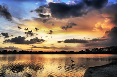 A Florida Sunset (` Toshio ') Tags: trees sunset vacation sky orange usa lake holiday reflection bird beach colors clouds america orlando sand colorful unitedstates florida cloudy south silhouettes southern kissimmee egret soe hdr toshio orangelake mywinners superaplus aplusphoto