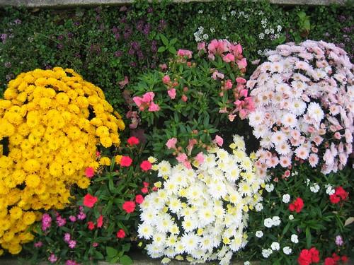 Flowers in the zen garden