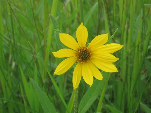 A Pretty Yellow Flower