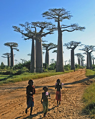 3 little girls at Baobabs World (Z Eduardo...) Tags: africa people tree girl kid madagascar baobab aplusphoto holidaysvacanzeurlaub theunforgettablepictures betterthangood bestcapturesaoi