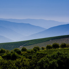 Douro Valley in the Morning