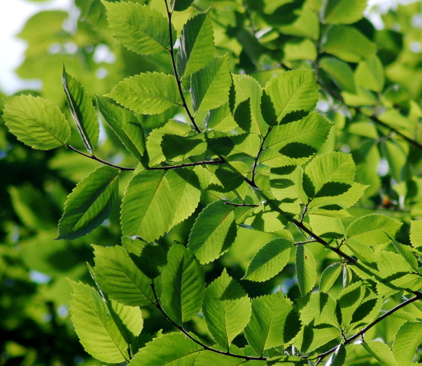 082308_leaves_2_enhanced