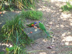 Tropical birds (- MattW -) Tags: zoo sydney australia tarongazoo tropicalbirds