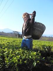 Trainee P1060305 (grebberg) Tags: leaves training tanzania highlands estate tea plantation picking collecting teaplantation 2007 teabush tukuyu teaplant kyimbila kyimbilateaeastate