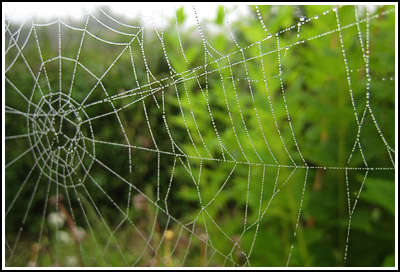 Spiderweb2 copy