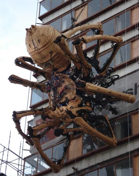 Largest Camel Spider On Record Biggest camel spider ever