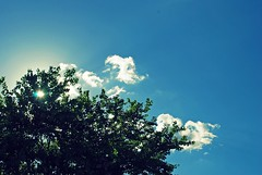 day 003/365 (kevkev44) Tags: blue sky tree silhouette clouds tampa landscape florida crossprocess d60 nikond60 imbehindadayalreadynoooo