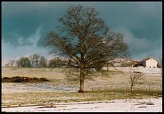 bois déduit (ligama) Tags: tree nature landscape hiver neige paysage arbre limousin hautevienne