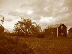 apple tree and house dressed in sepia
