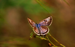 butterfly (sibi ar ( I'm BACK :)) Tags: butterfly canon20d sibi