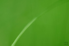 Green | Line (^ Angel ^) Tags: life abstract green live line    aplusphoto