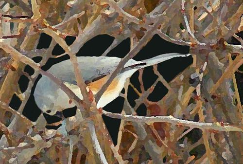 bird-in-prayer-9