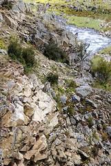 Bharal, Himalayan blue sheep (reurinkjan) Tags: wildlife tibet 2008 himalayan shamo tsurphu bluesheep wildsheep bharal utsang tibetanlandscape himalayanwildlife janreurink pseudoisnayaur himalayanwildsheep khambochu dowolungvalley stodlungbdechen tlungdechencounty     rnapo rnaba wildernessanimalsgnpridak tibetanecologyfoundationbodyulskyekhamsthebsrtsatshogspa tibetanplateaumammalsmthosganggigiothungsrogchags bluesheepgnaba animalsemscan animalsoftibet