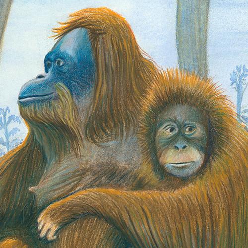 orangutans600pxsquaredetail