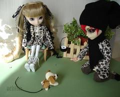 Hey, doggy! (ochiva) Tags: dolls pullip hash shinku junplanning taeyang ochiva