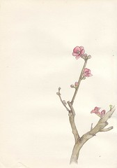 Bonsai (ayco311) Tags: flower pencil paper japanese drawing bonsai watercolour