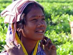 Young tea picker (Linda DV) Tags: people woman india canon geotagged tea fields assam 2008 sevensisters teafields 7sisters northeastindia teapicking powershots5is lindadevolder