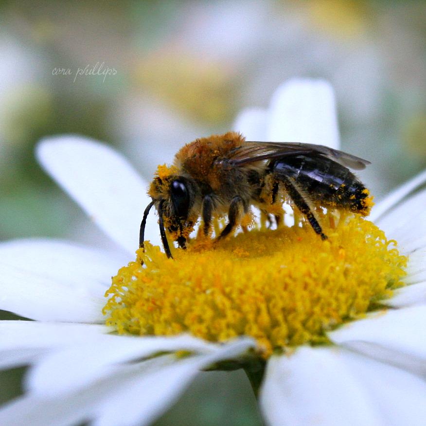 Bee Butter